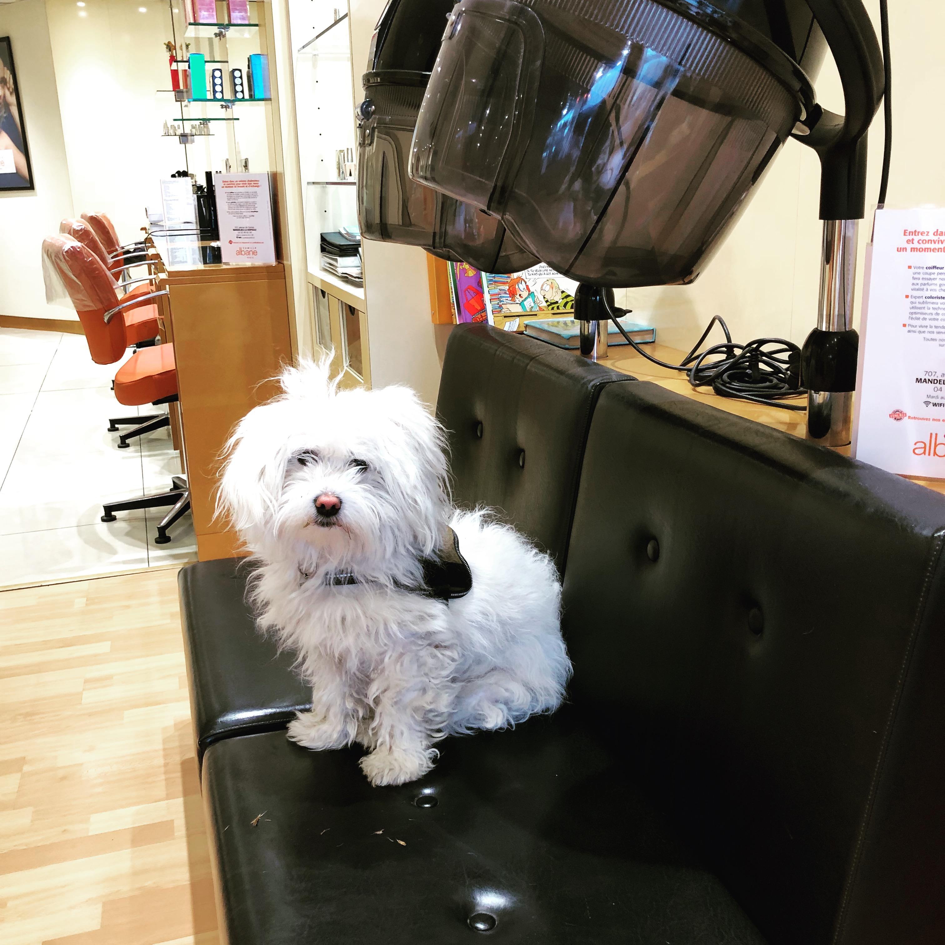 Milo chez le coiffeur