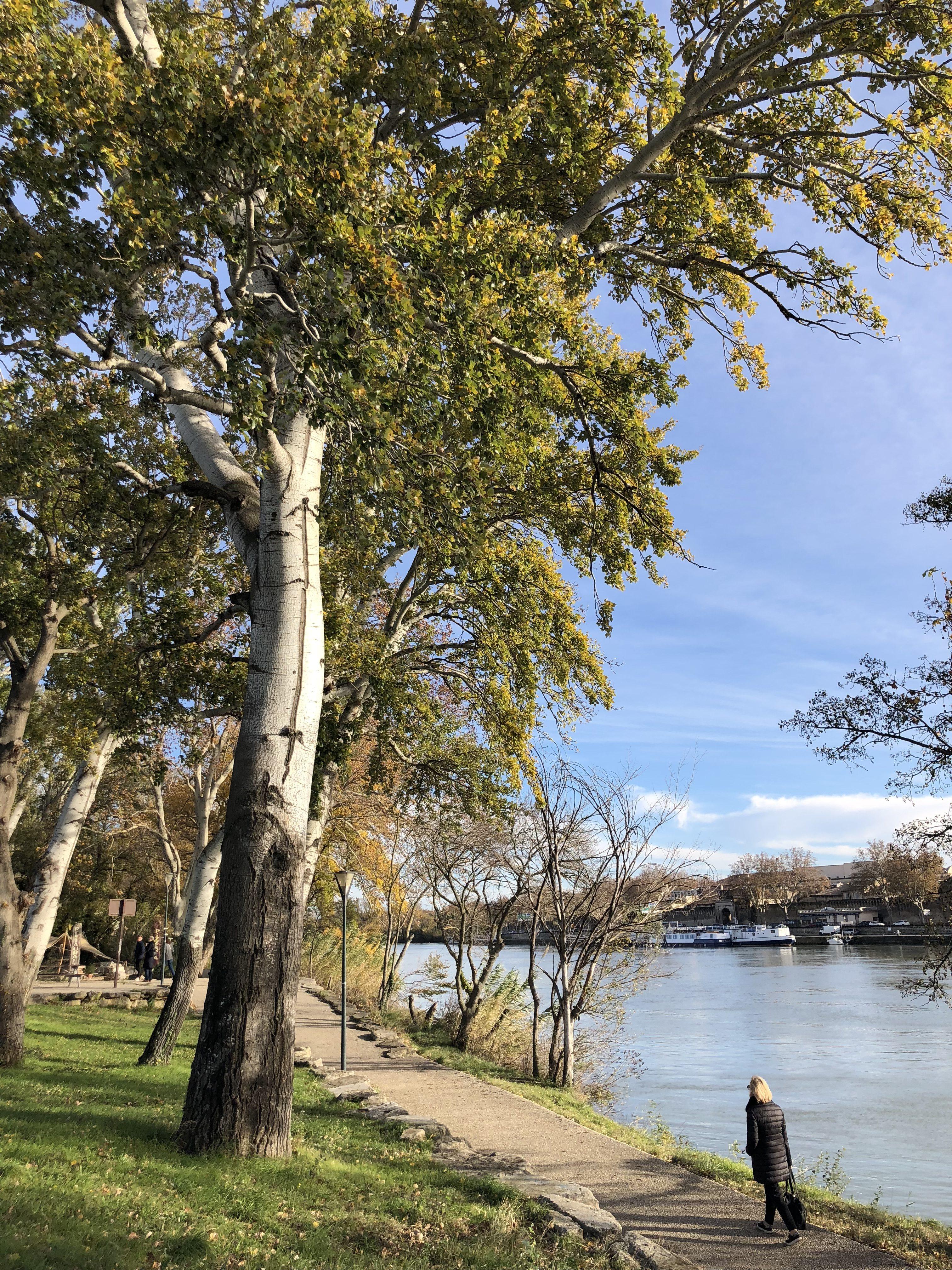 Balade Ile de la Barthelasse Avignon