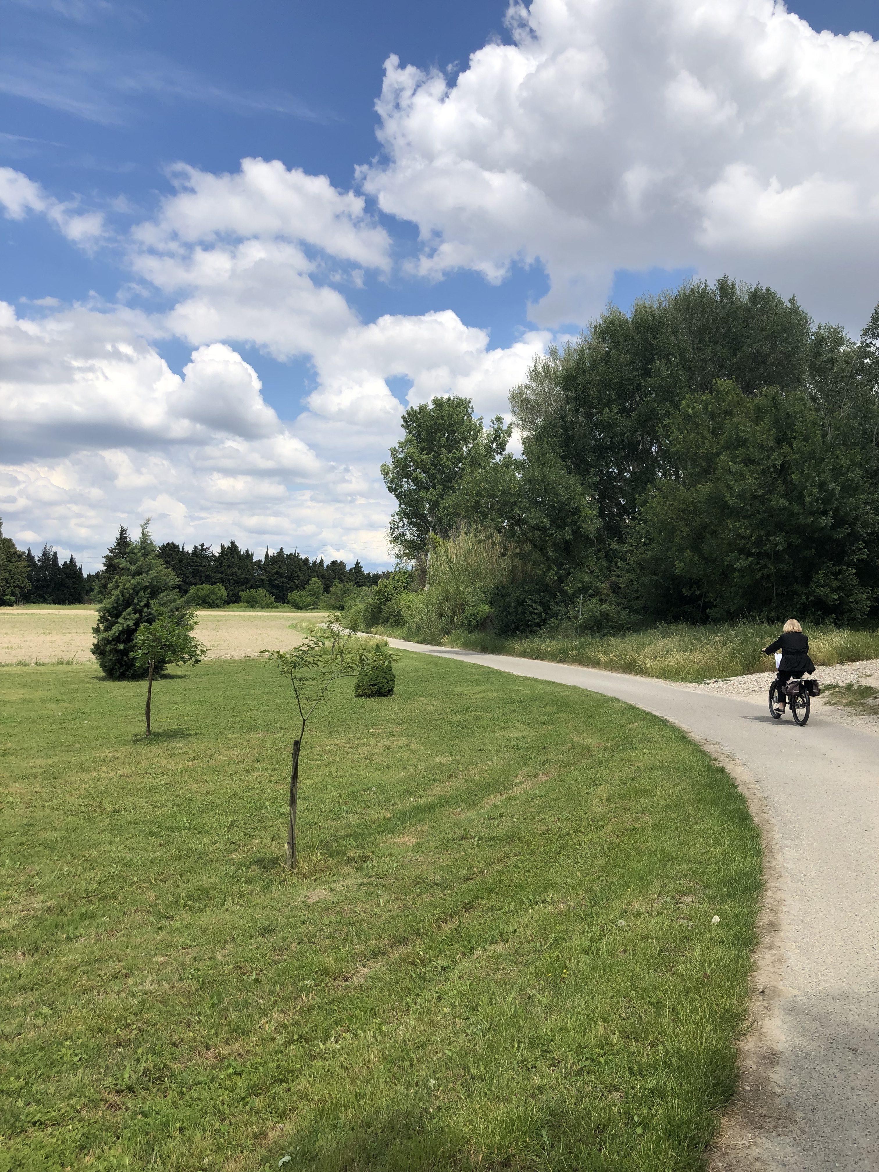 Location de vélo sur l'île de la Barthelasse