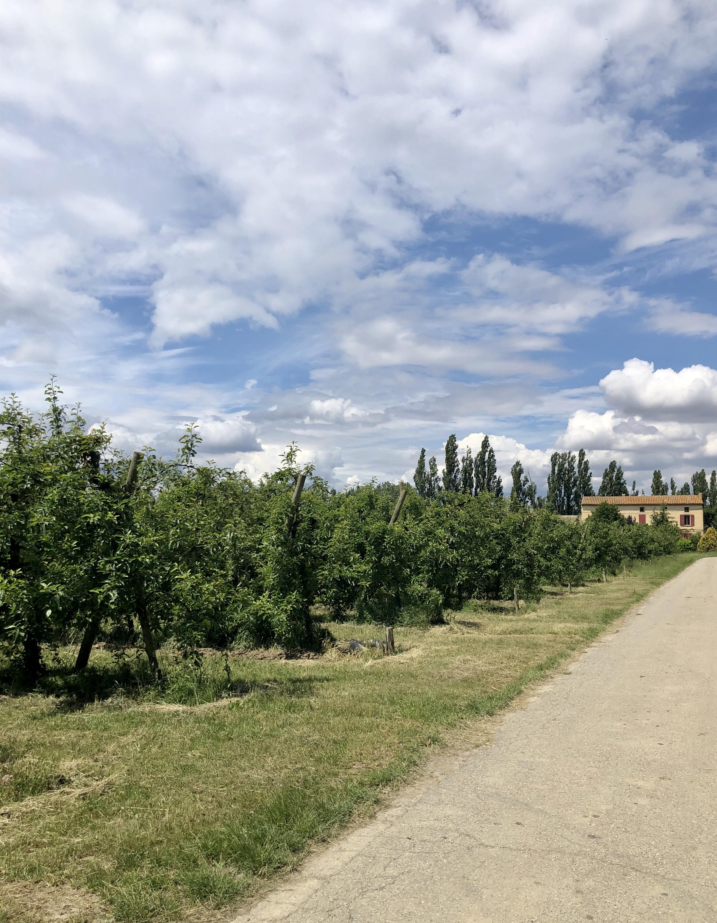 Vergers sur l'île de la Barthelasse à Avignon